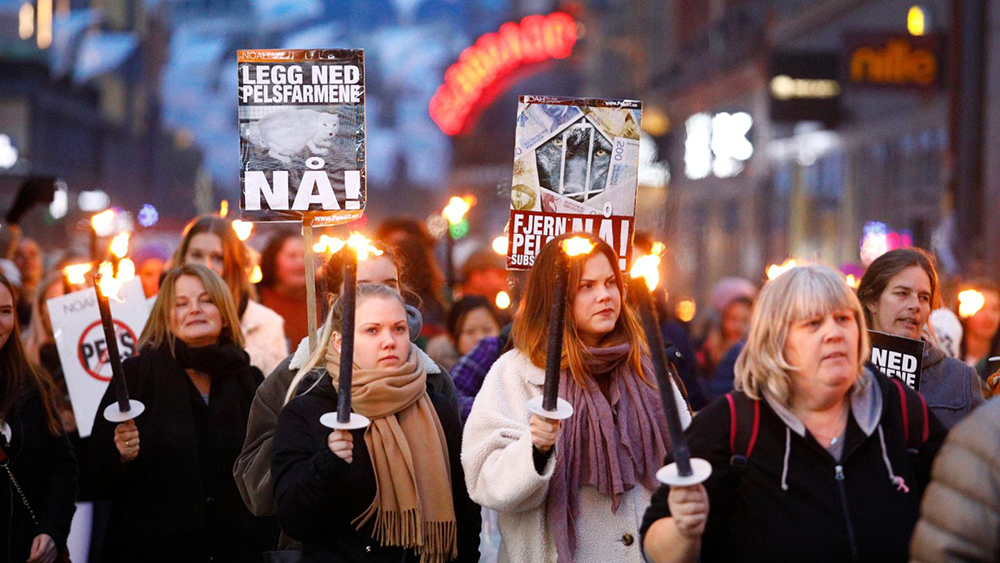 Des milliers de personnes protestent contre l'industrie de la fourrure à Oslo