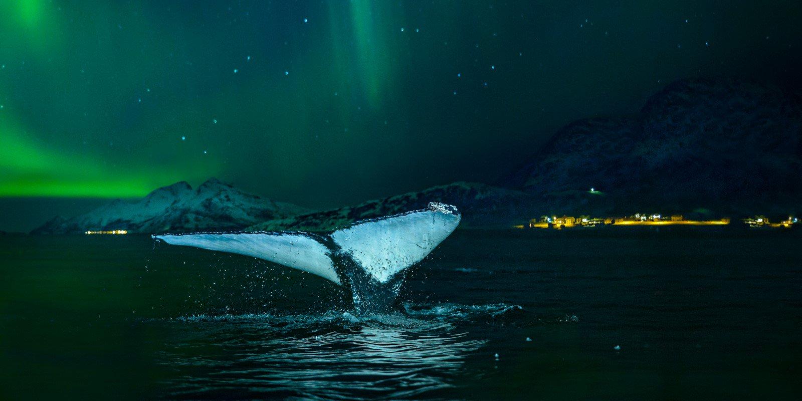 Hurtigruten promet des aurores boréales