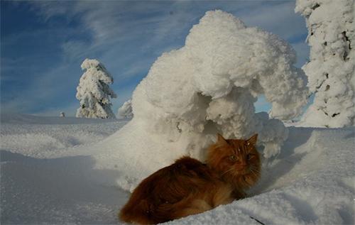Jesper, le premier chat de traîneau