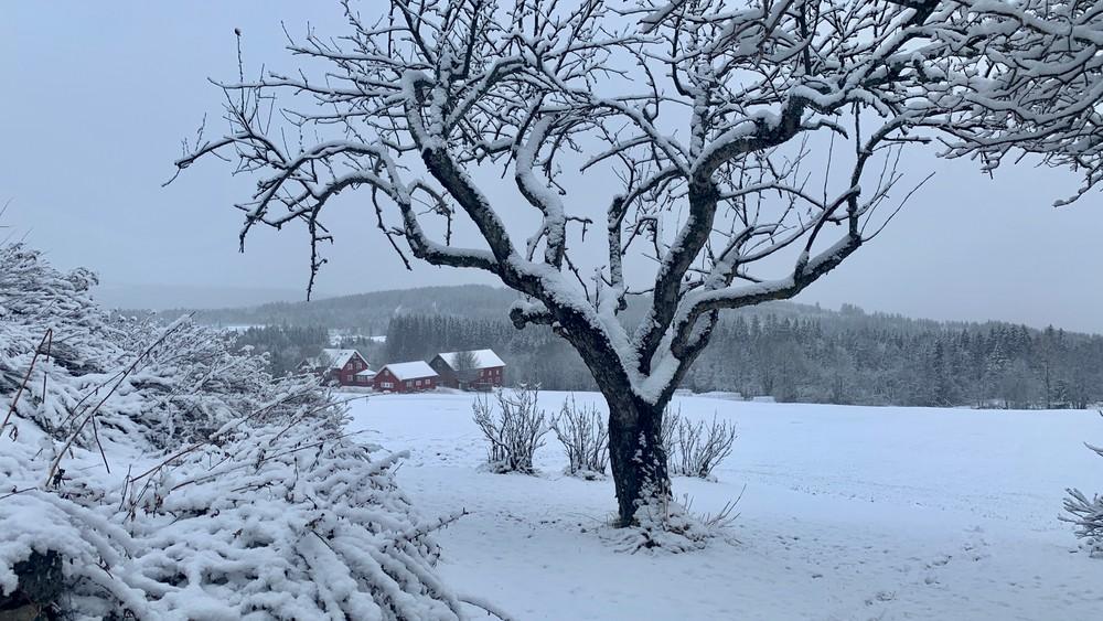Un 1er Mai sous la neige dans l'est de la Norvège