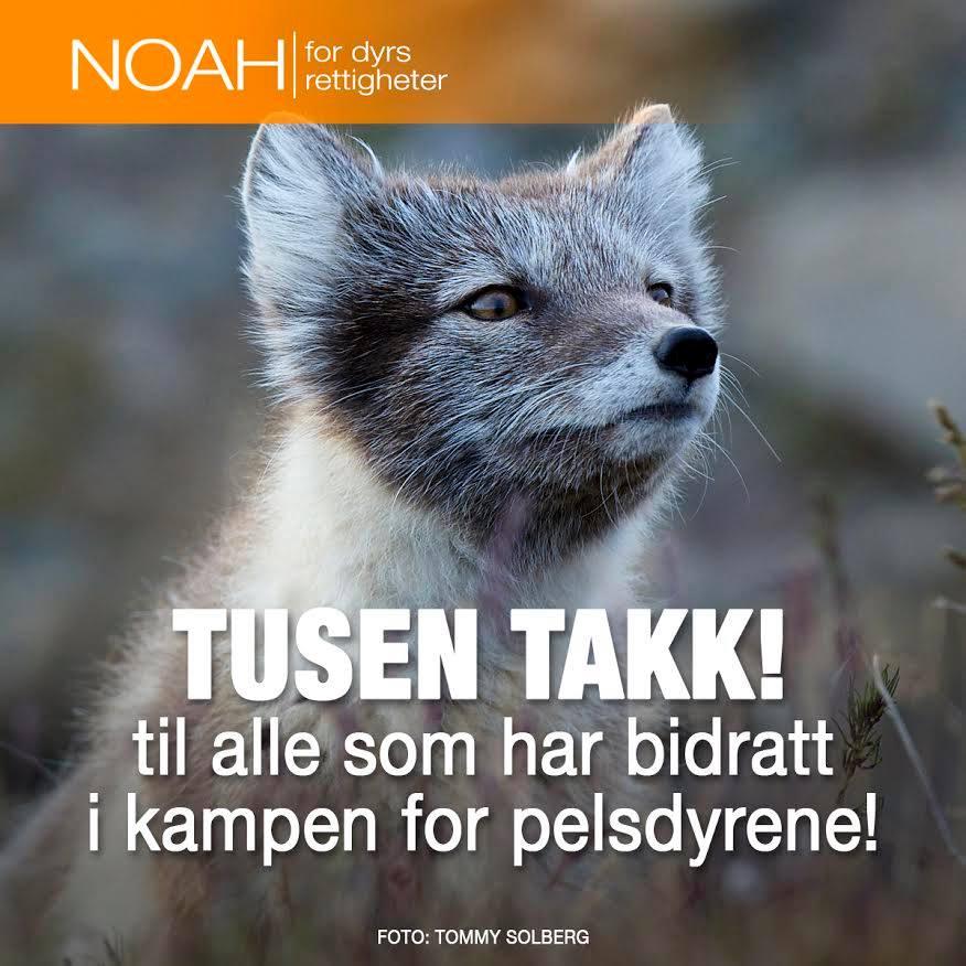Victoire : la Norvège va interdire l'élevage des animaux à fourrure