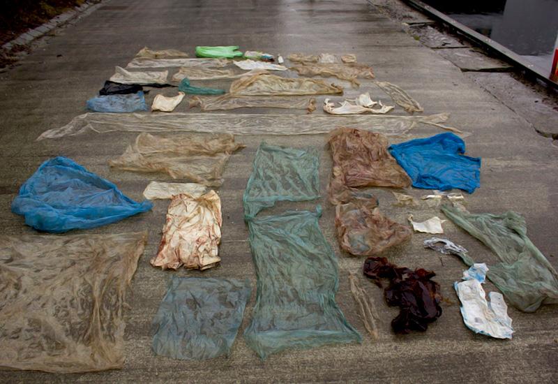 L'estomac d'une baleine échouée contenait 30 sacs de plastique
