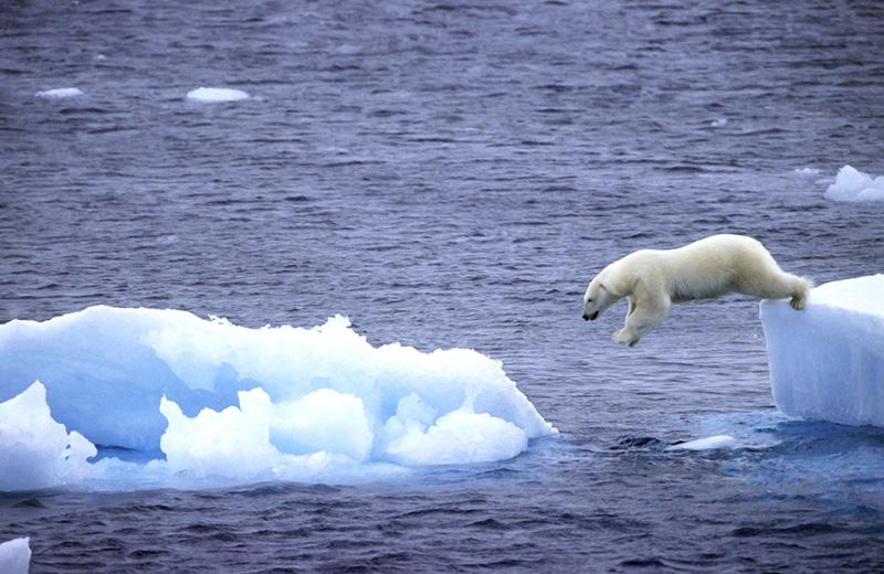 Océan Arctique : Moratoire sur la pêche commerciale