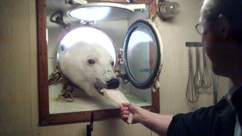 La photo d'un ours polaire prise il y a 17 ans se propage sur internet