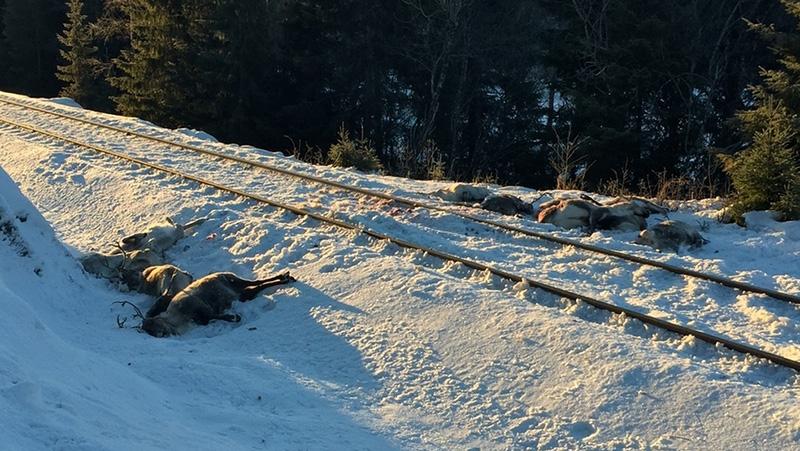 106 rennes tués en Norvège par des trains de marchandises