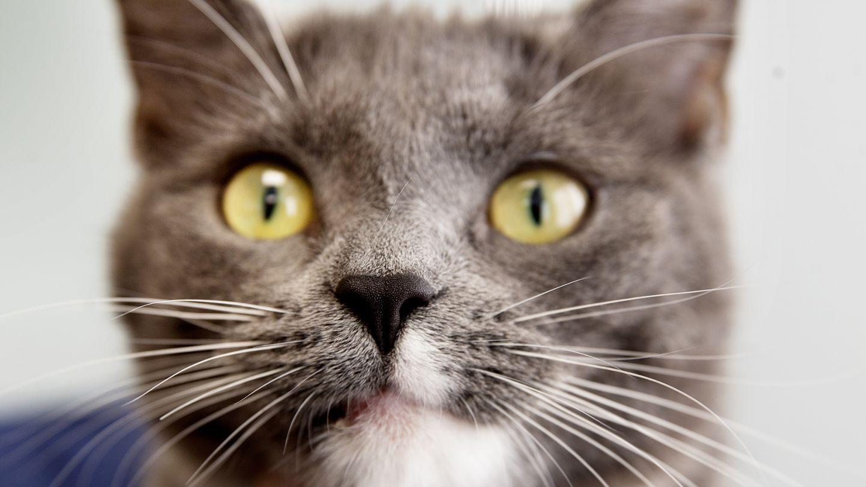 Tentative de sauvetage d'une centaine de chats par une association norvégienne