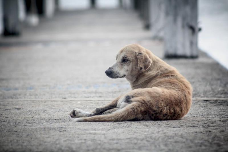 La nouvelle vie des chiens espagnols en Norvège